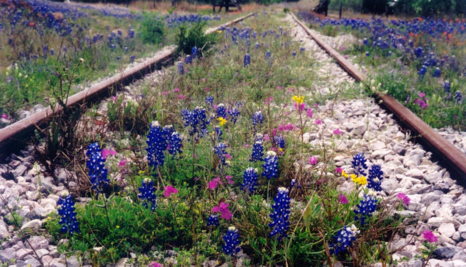 Railroad showers bring railroad flowers