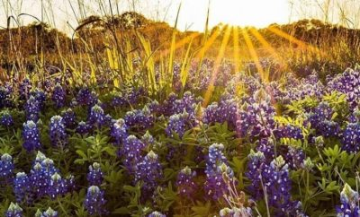Perfect Instagram Posts of Texas Bluebonnets You Won't Want to Miss