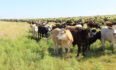 Birdwell and Clark Ranch Featured for Advancements in Land Stewardship With Great Results