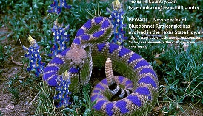 Tips for Bluebonnet Sight-Seeing (Minus the Critters)