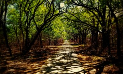 Natural Beauty Beckons You to Texas: Ray Roberts Lake State Park – Johnson Branch