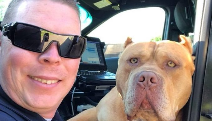 Texarkana Officer Responds to Vicious Dog Call and Instead Finds 'Gold'