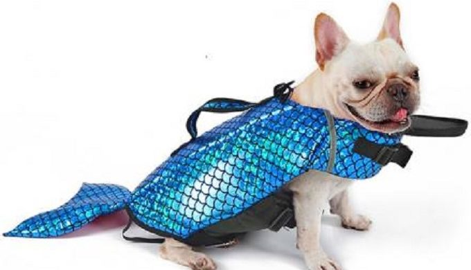 This Mermaid Life Jacket for Your Dog Will Light Up Your Summer