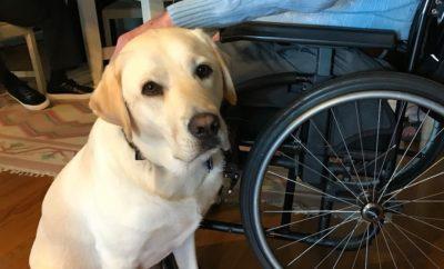 Meet Sully: Former President George H.W. Bush Gets a Service Dog
