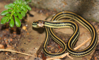 Texas Snakes [QUIZ]