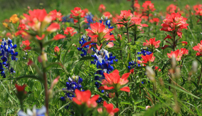 3 Great Destinations for Taking a Texas Wildflower Road Trip
