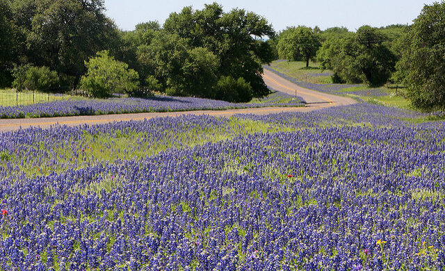 Bluebonnet soil