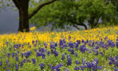 2017 Bucket List: 5 Texas Hill Country Trips