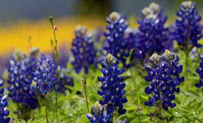 How To Create A Winning Heat And Drought-Resistant Texas Hill Country Garden