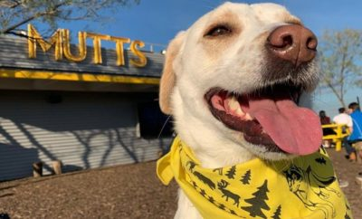 This Dallas Dog Park Restaurant is Everything You've Dreamed About