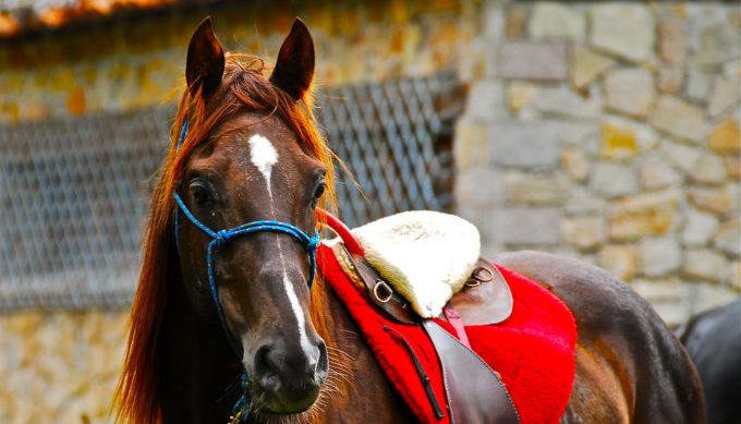 horse, Texas