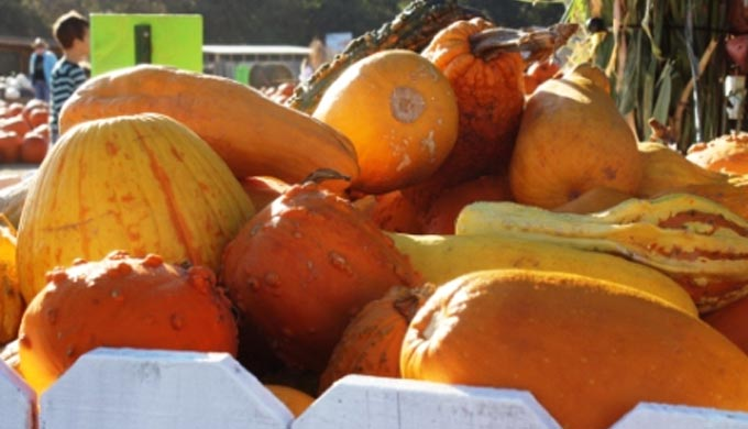 5 Pumpkin Patches You Can't Miss This Fall