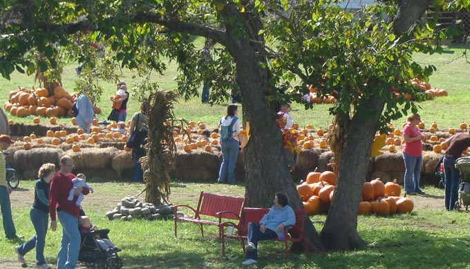Great country farms pumpkin patch
