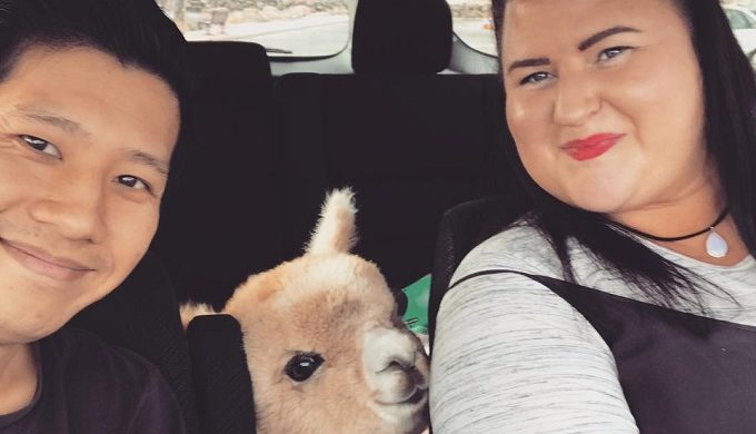 Alfie the Alpaca Takes Over the Internet: The Cutest Pet on Instagram?