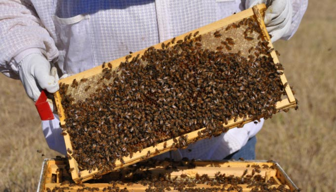 5 Things You Need to Know About Beekeeping