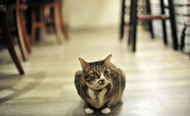 Cat cafes in Houston