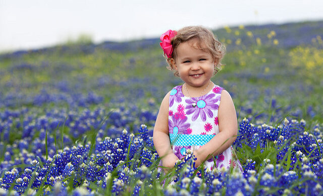 Bluebonnet lighting