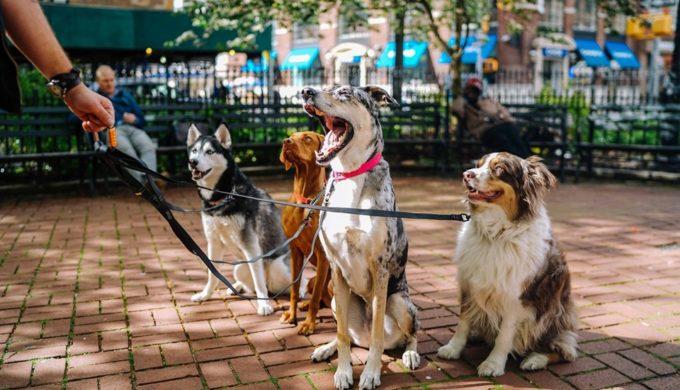 Dog Friendly San Antonio Event: Have Fun at Fall Fur Fest