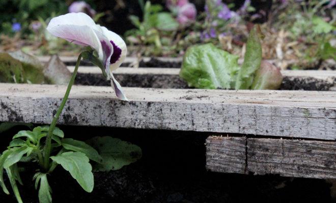 5 Ways to Repurpose a Wooden Pallet