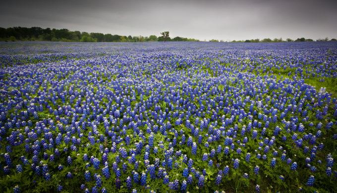 Happy is Texas.