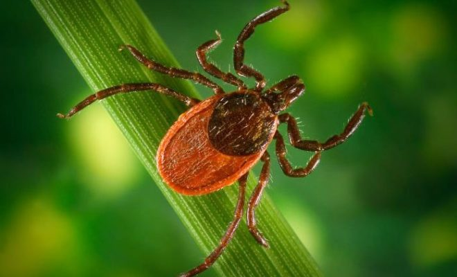 Could the 2019 Texas Tick Season be Worse than Usual?