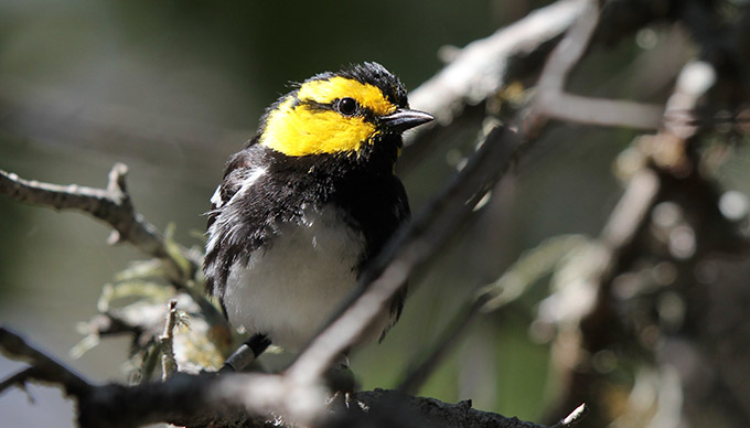 7 Great Places for Birding in The Hill Country