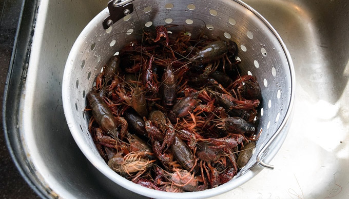 7 Tips for a Successful Crawfish Boil