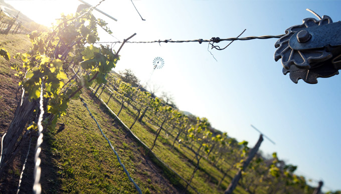 8 Unique Wineries to Visit in The Texas Hill Country