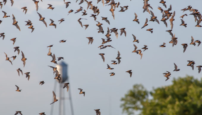 Batty Experiences in the Texas Hill Country: Prime Lone Star State Viewing Opportunities