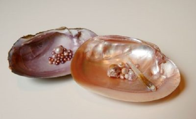 The Concho River Pearl: A Beautiful Texas Enigma That Adorns Many a Sweetheart's Ring Finger
