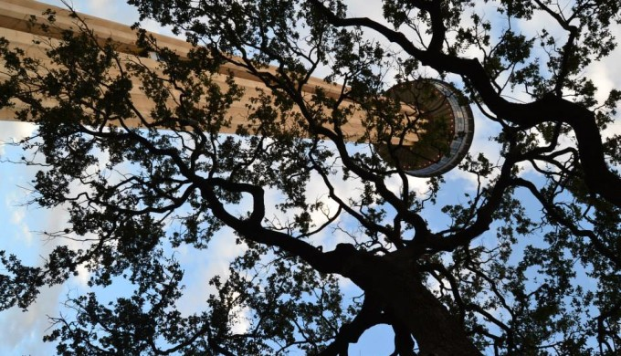 Tower of the Americas as seen through tree branches