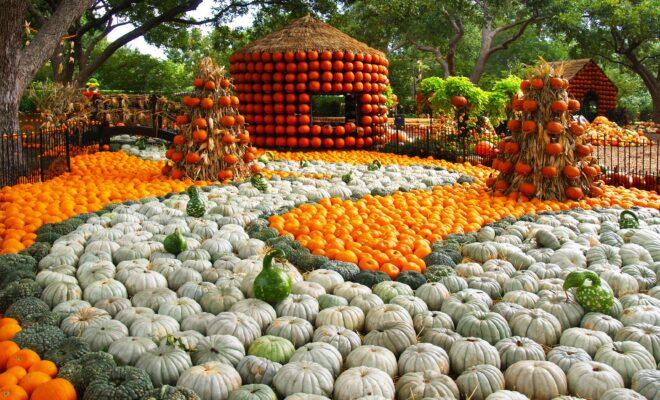 Autumn at the Arboretum Returns to Dallas This September