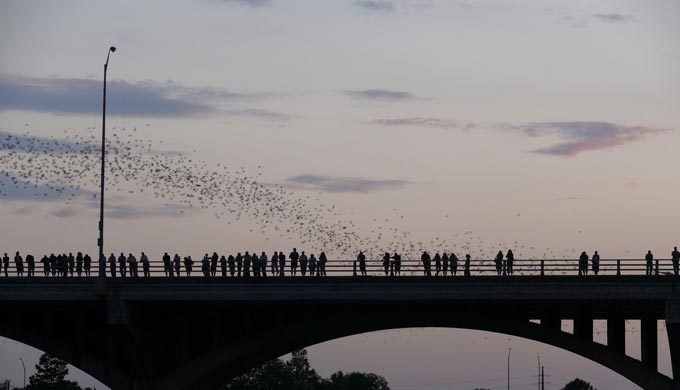 Austin: Seasonal Home to Millions of Migratory Bats
