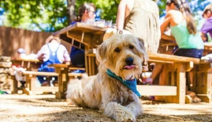Bangers-Sausage-Dog-Friendly_104903