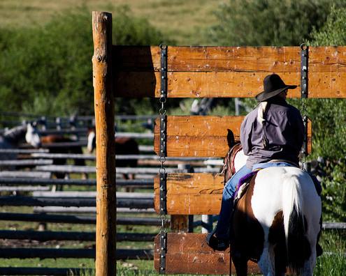 Bar M Guest Ranch