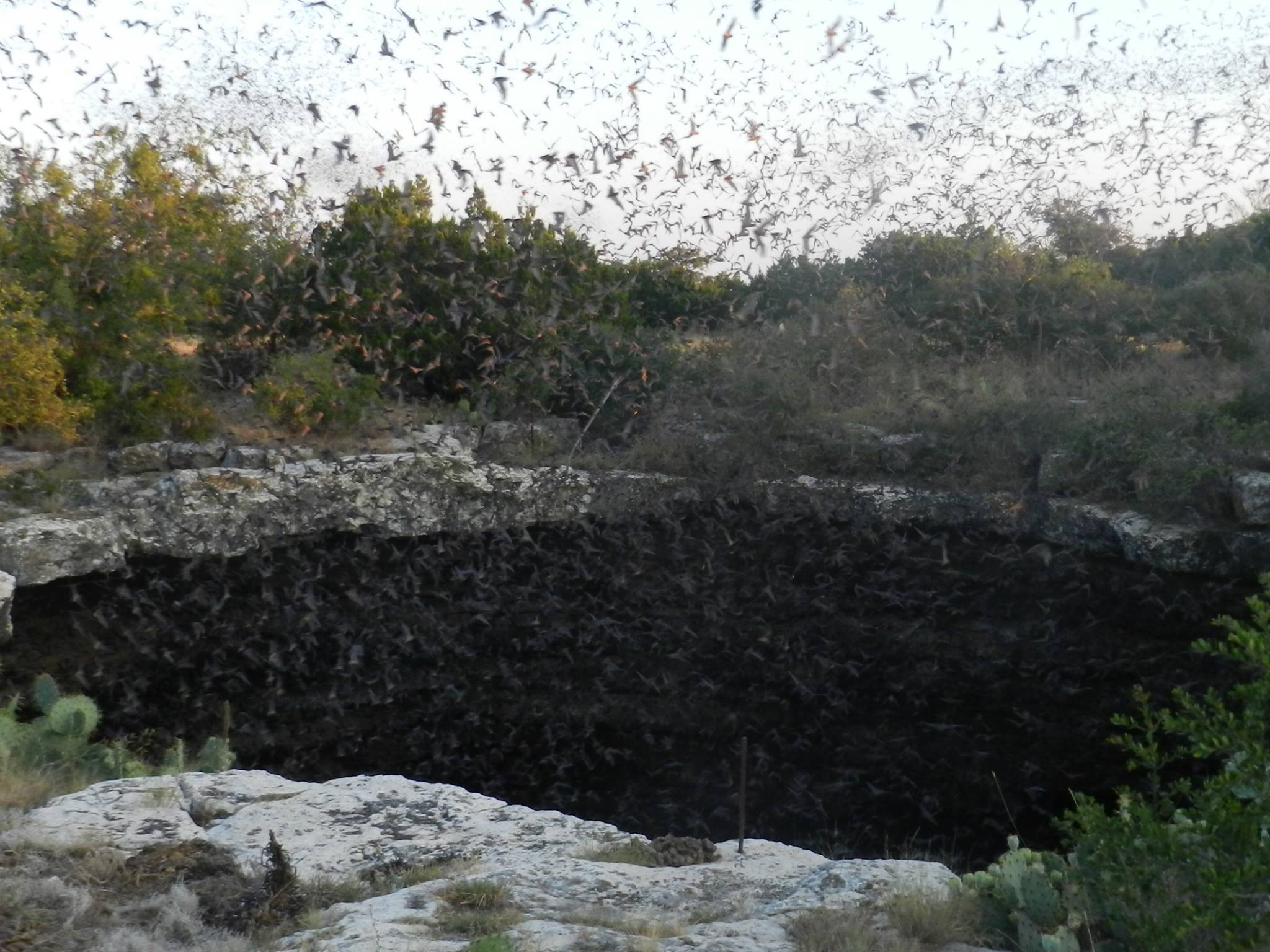Bat Flights You Must See Around The Texas Hill Country