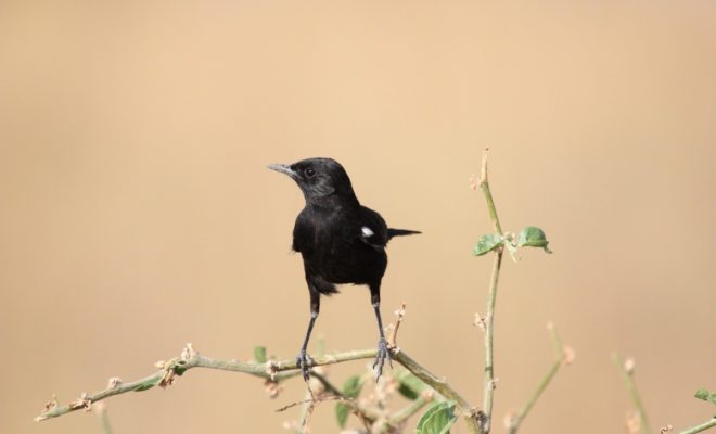 The (Secret) Behavior of Texas Birds: To Live is to Fly