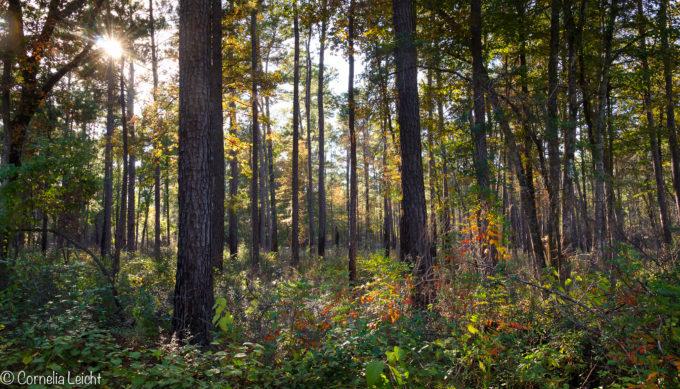 big thicket national preserve, Texas, natural wonder