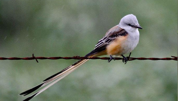 Bird Watching in The Texas Hill Country