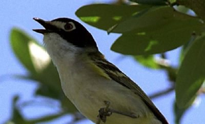 Confluence of Birds in Concan Makes for a Wonderful Way to Enjoy Wildlife in Texas