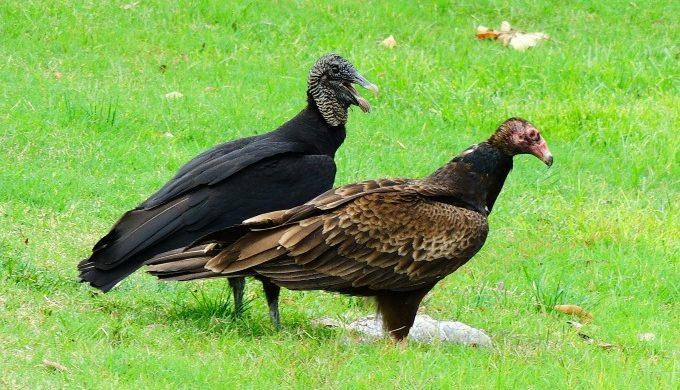 Black vs Turkey