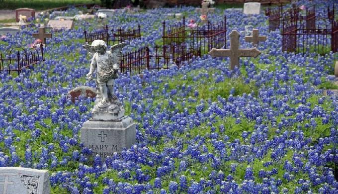Bluebonnet Cemetery