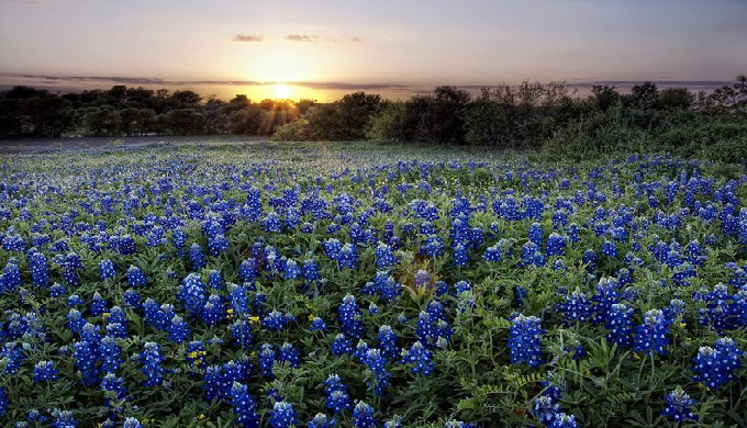 Things To Do In Omaha >> Bluebonnet Fever: A Virtual Road Trip