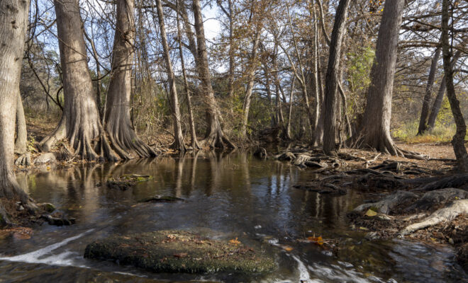 Re-Connect to Nature with These Classes at the Cibolo Nature Center