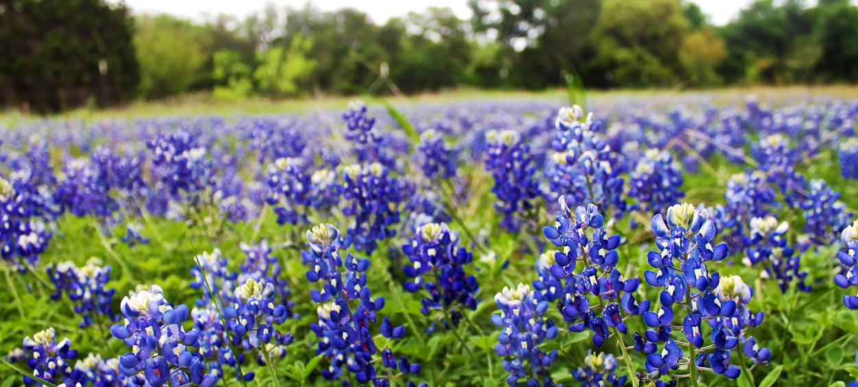 Burnet Texas