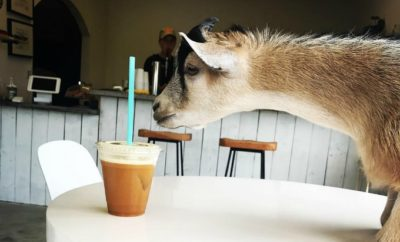 Civil Goat Coffee
