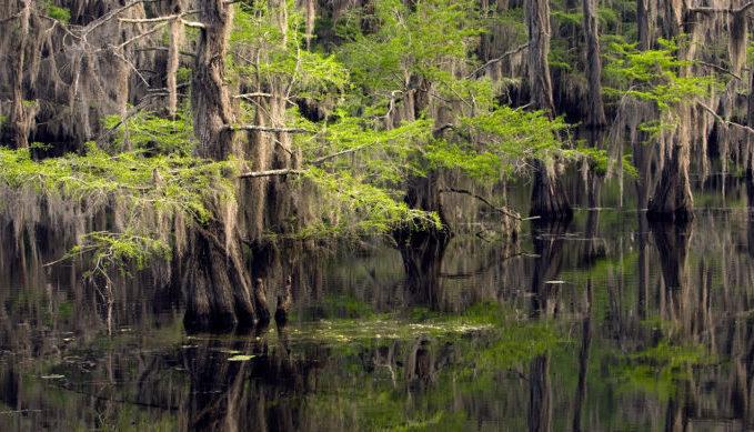Caddo Lake, Natural, Cypress, Texas Hill Country, Natural Wonders