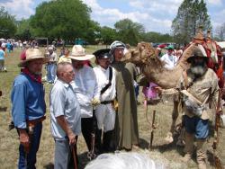 Camels of Camp Verde