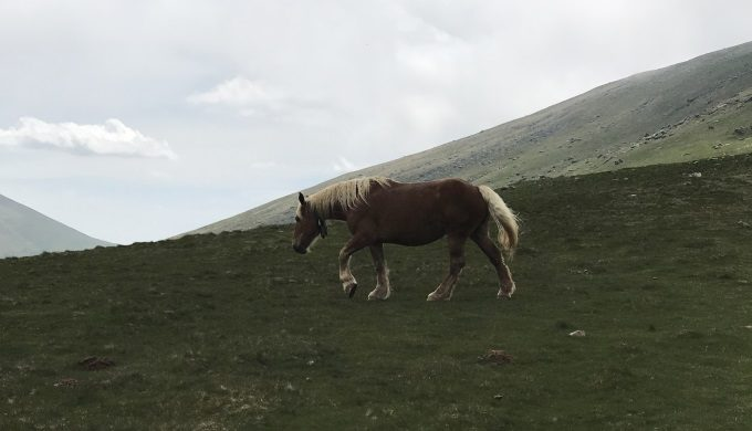 Horse in Pyrennes Mtns