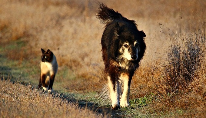 Cat and dog on path